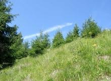Waldwiese2.jpg